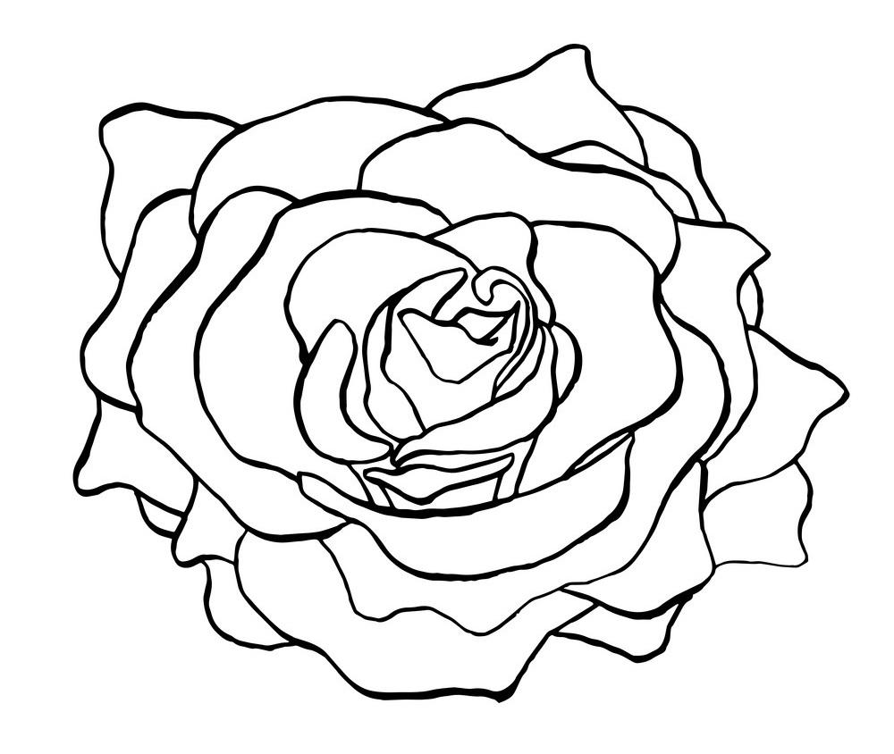 rose outline 2