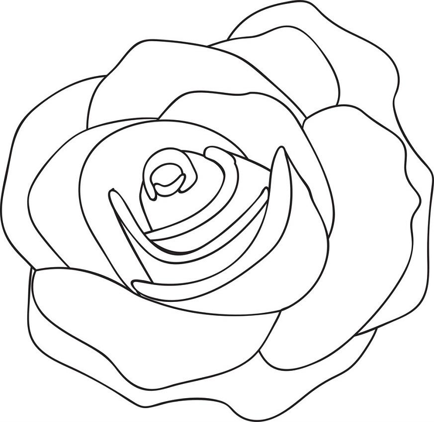 rose outline 3