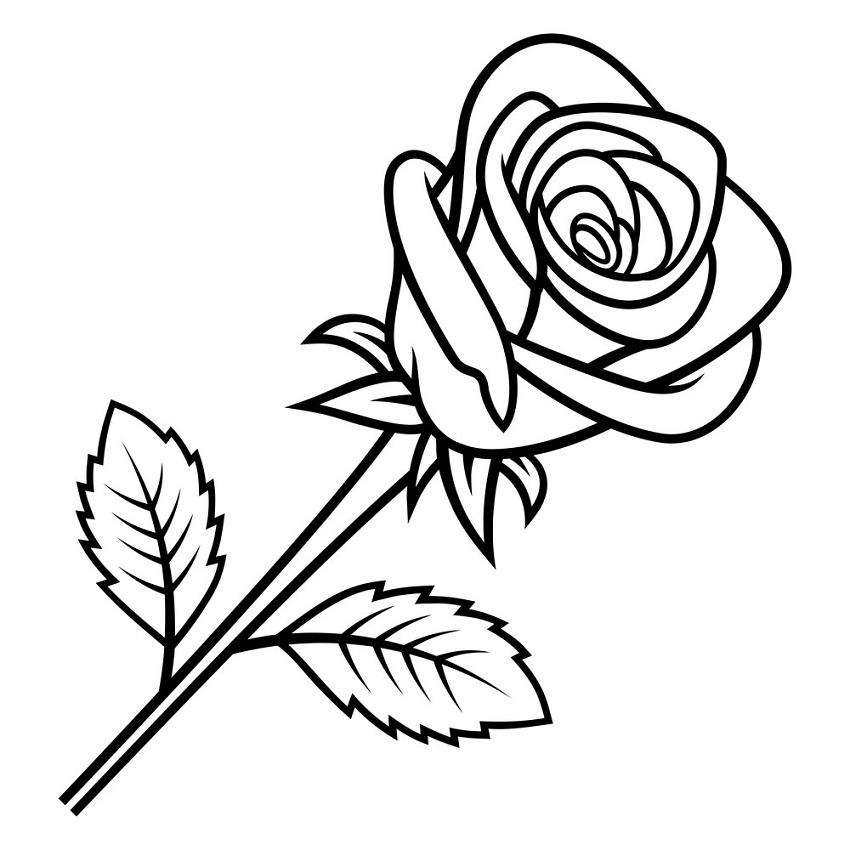 rose outline 4