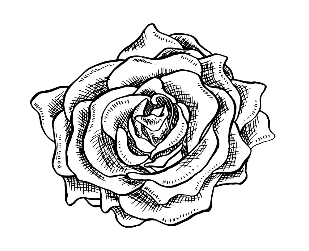 rose outline 5
