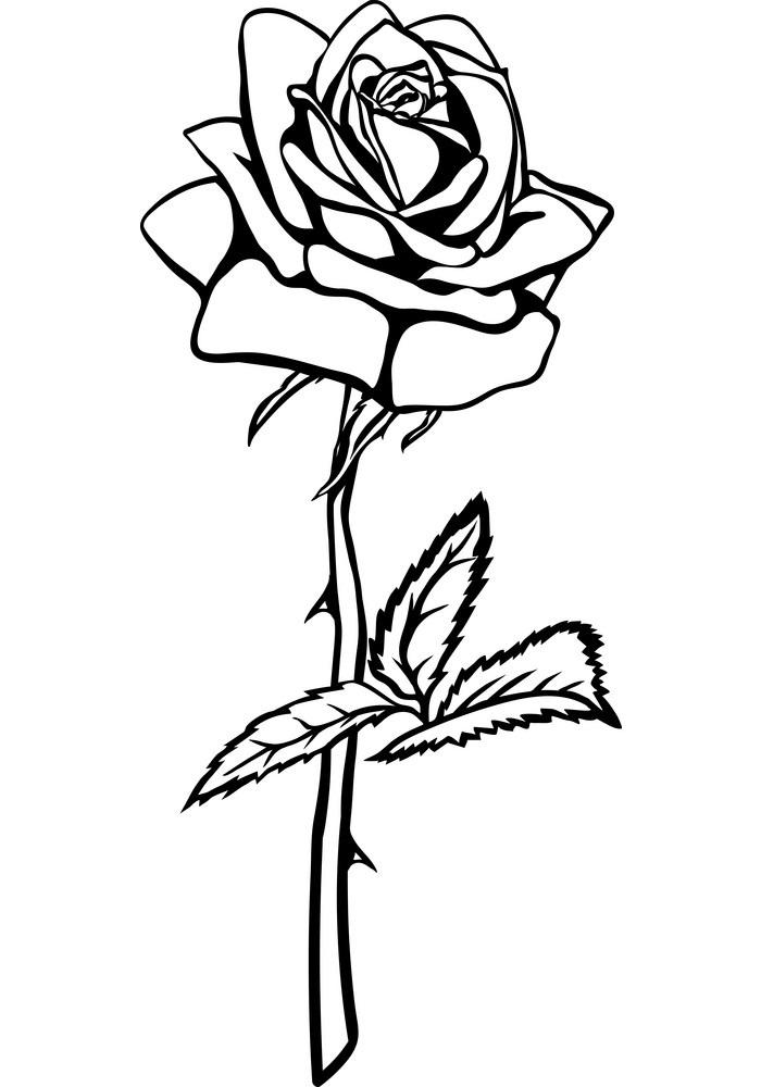 rose outline 6