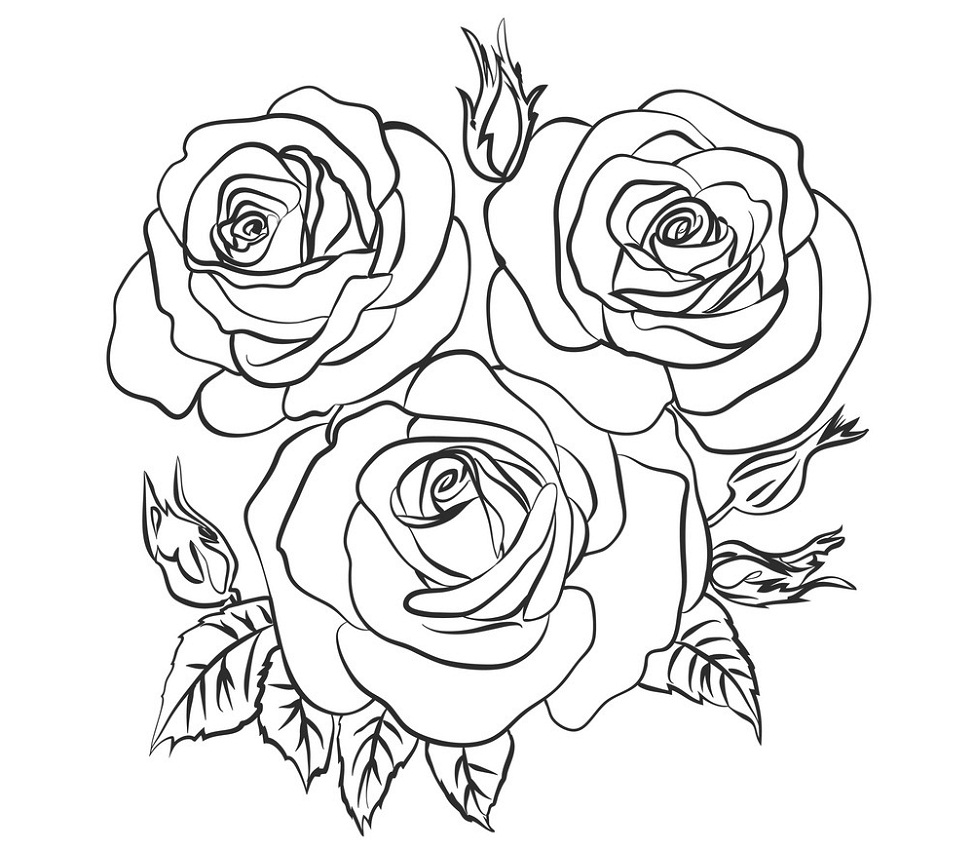 roses outline