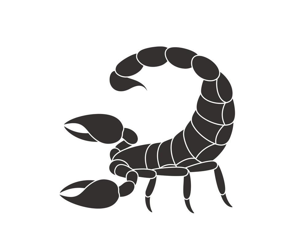 scorpion flat design