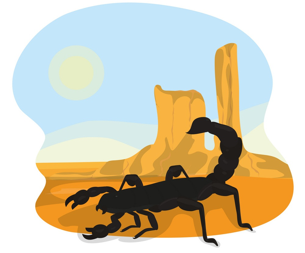 scorpion in the desert