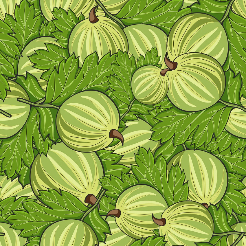seamless pattern with gooseberries