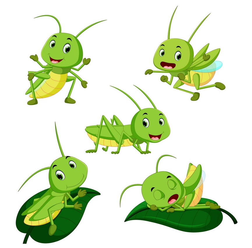 set of cute grasshoppers