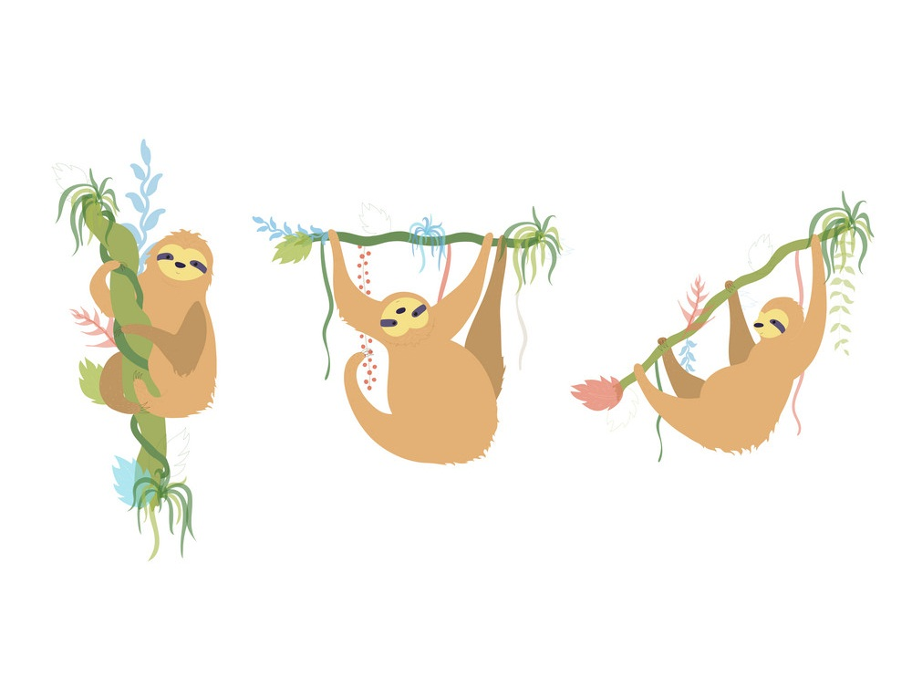 set of cute sloth