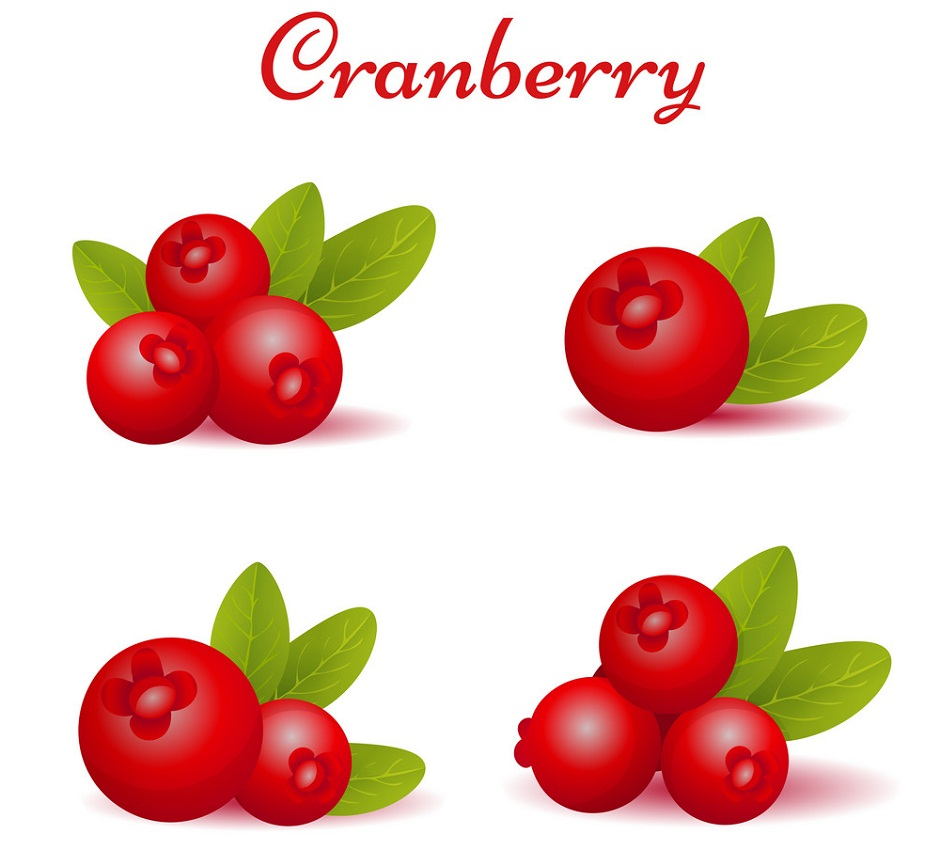 set of forest cranberries