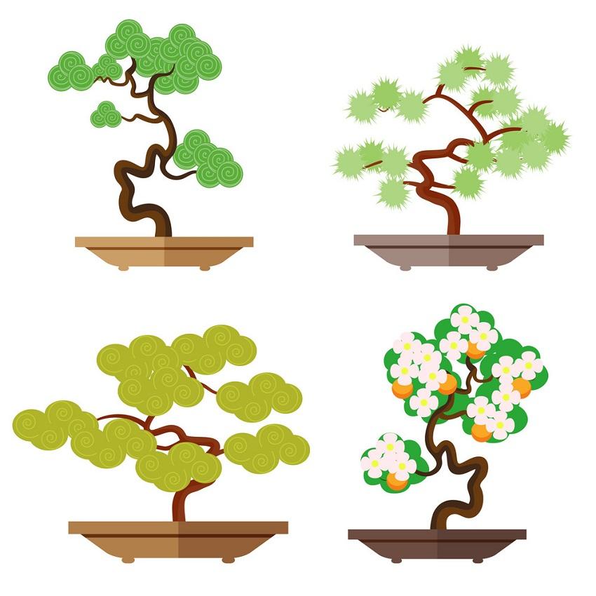 set of four bonsai trees
