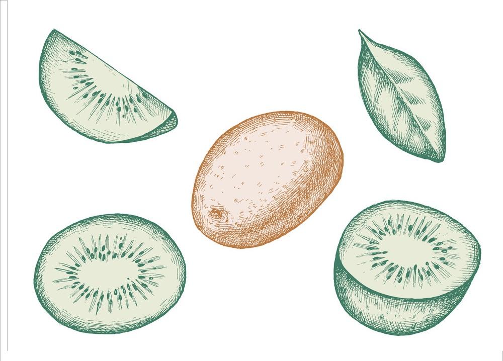 set of hand drawn kiwi fruits