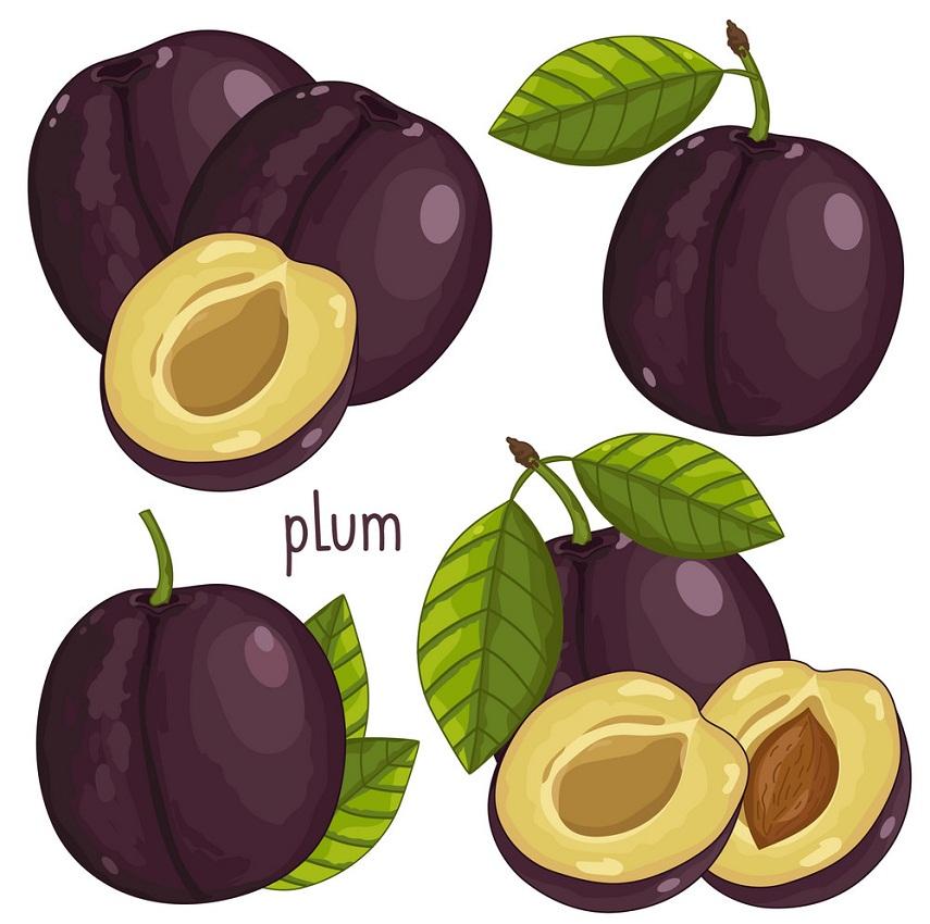 set of plums fruit