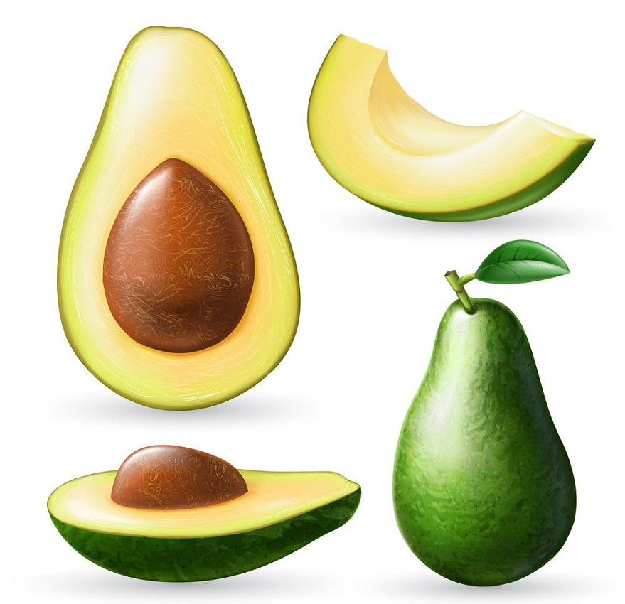 set of realistic avocado