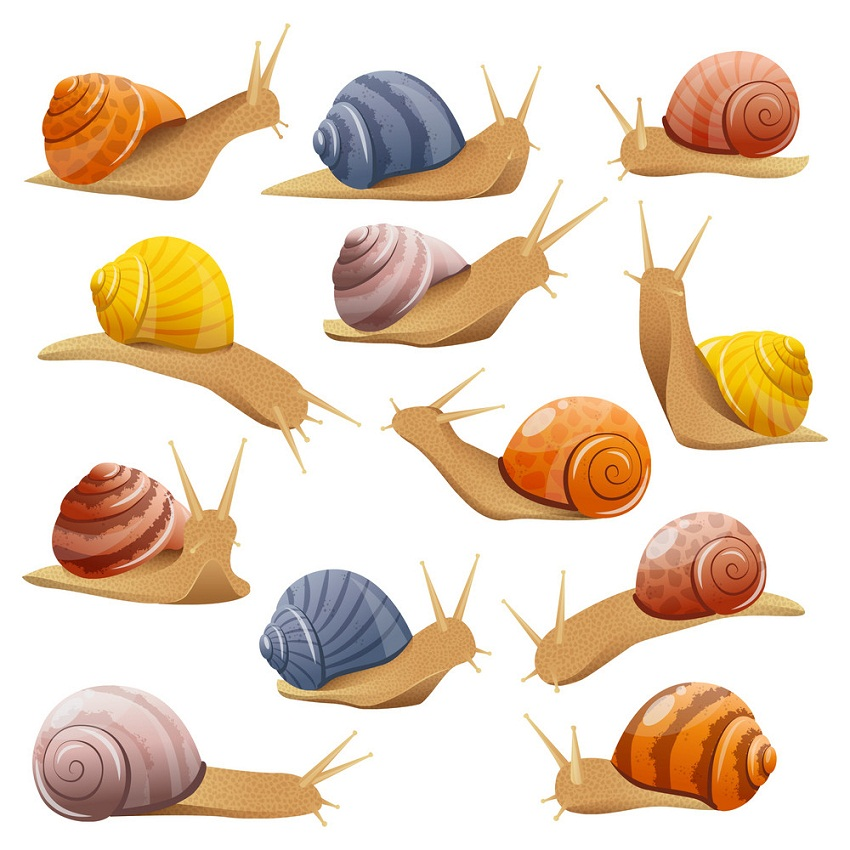 set of snails