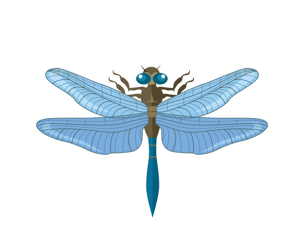 silhouette of a dragonfly