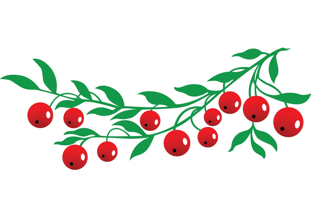 simple cranberries branch with leaves
