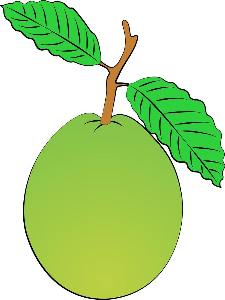 simple guava