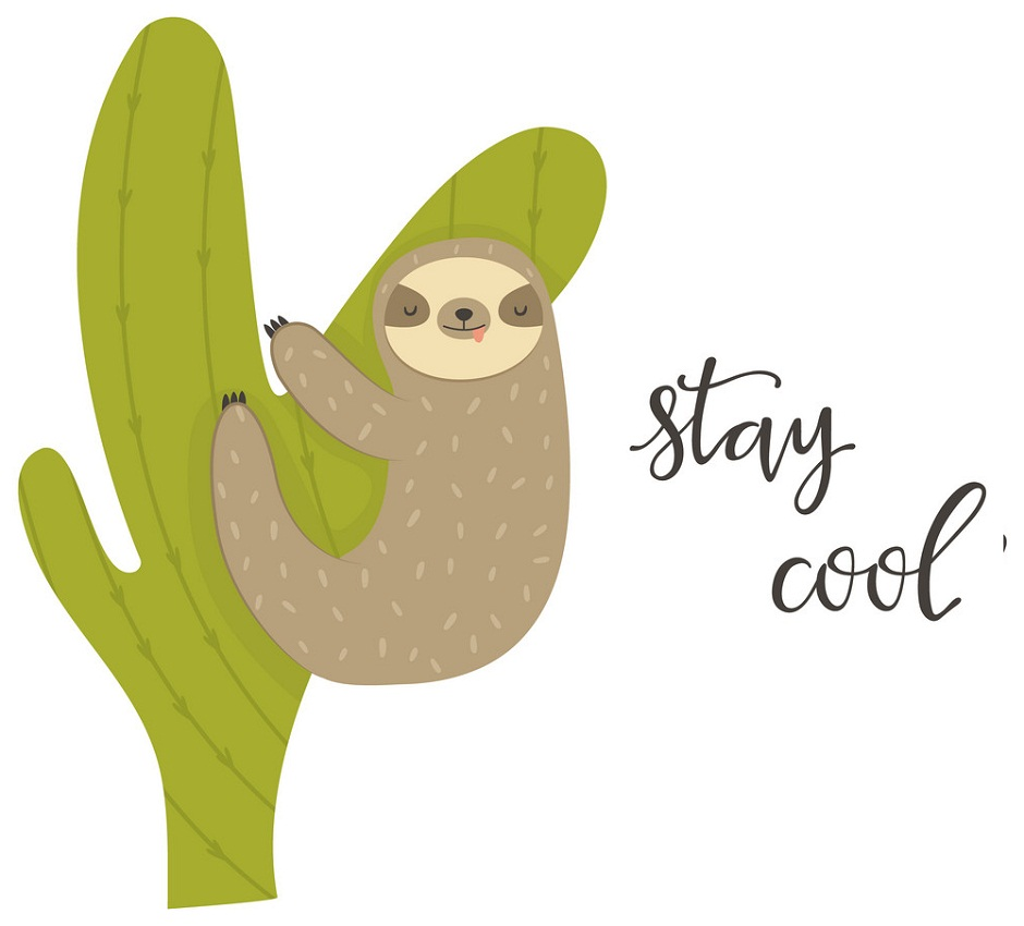sleeping sloth hanging on a cactus
