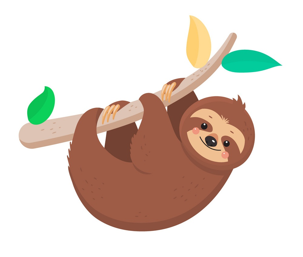 sloth on a branch
