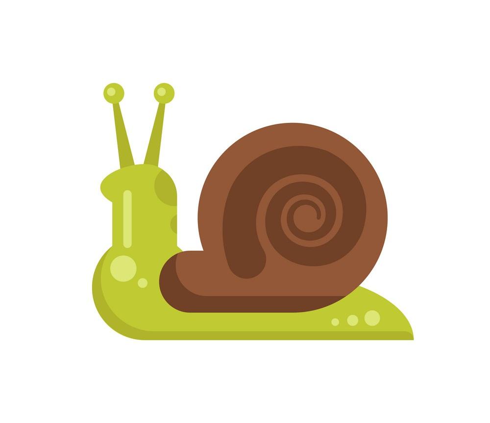 snail flat design