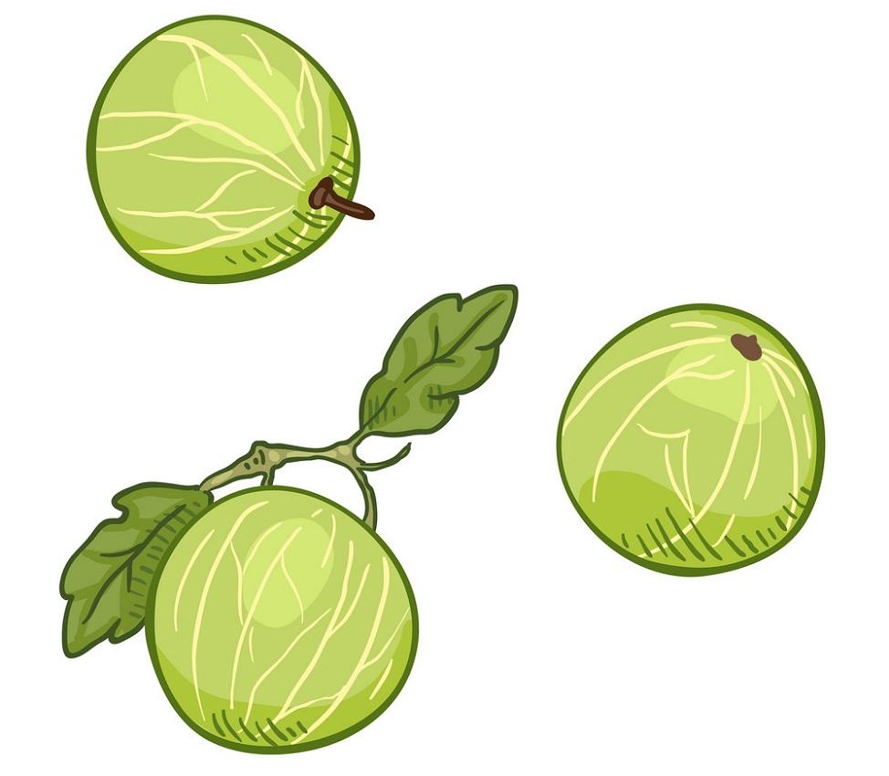three gooseberries fruit