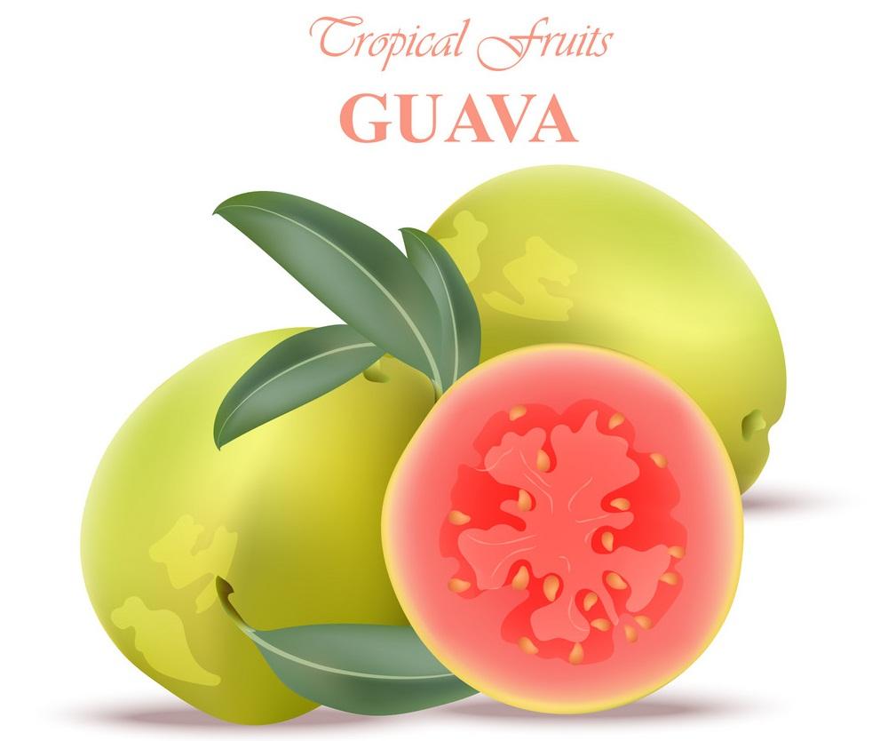 tropical guava fruits