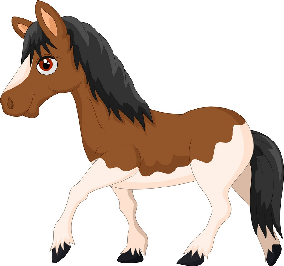 two-colored horse