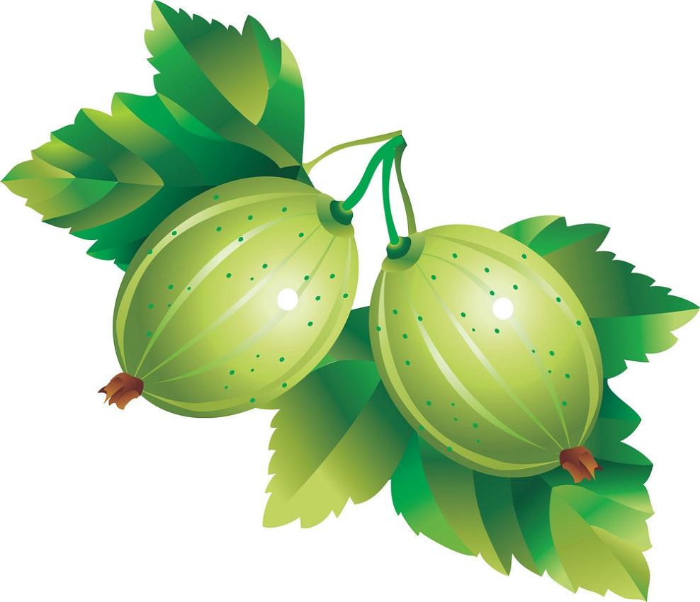 two gooseberries