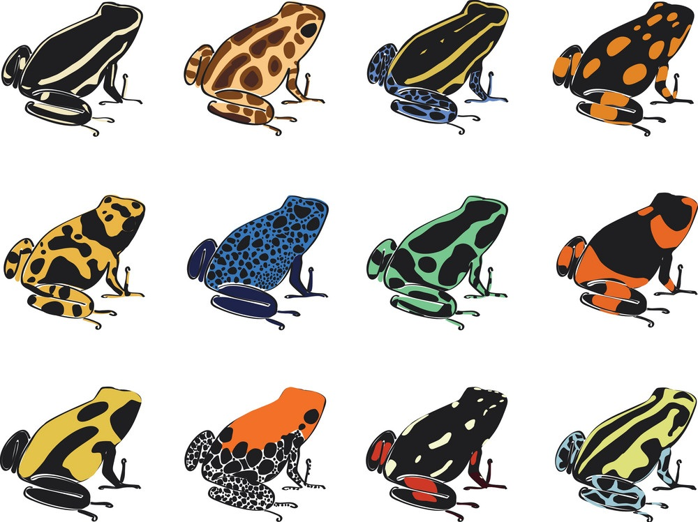 various species of poison-dart frogs