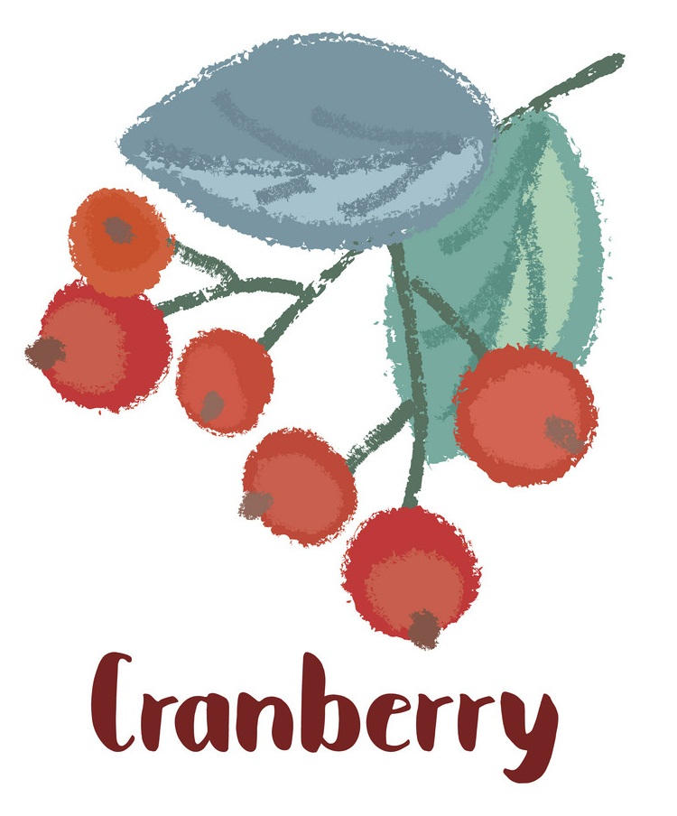 watercolor craneberry branch