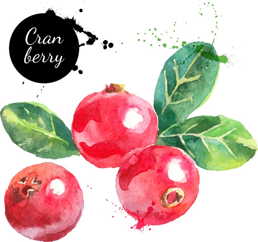 watercolor craneberry fruits