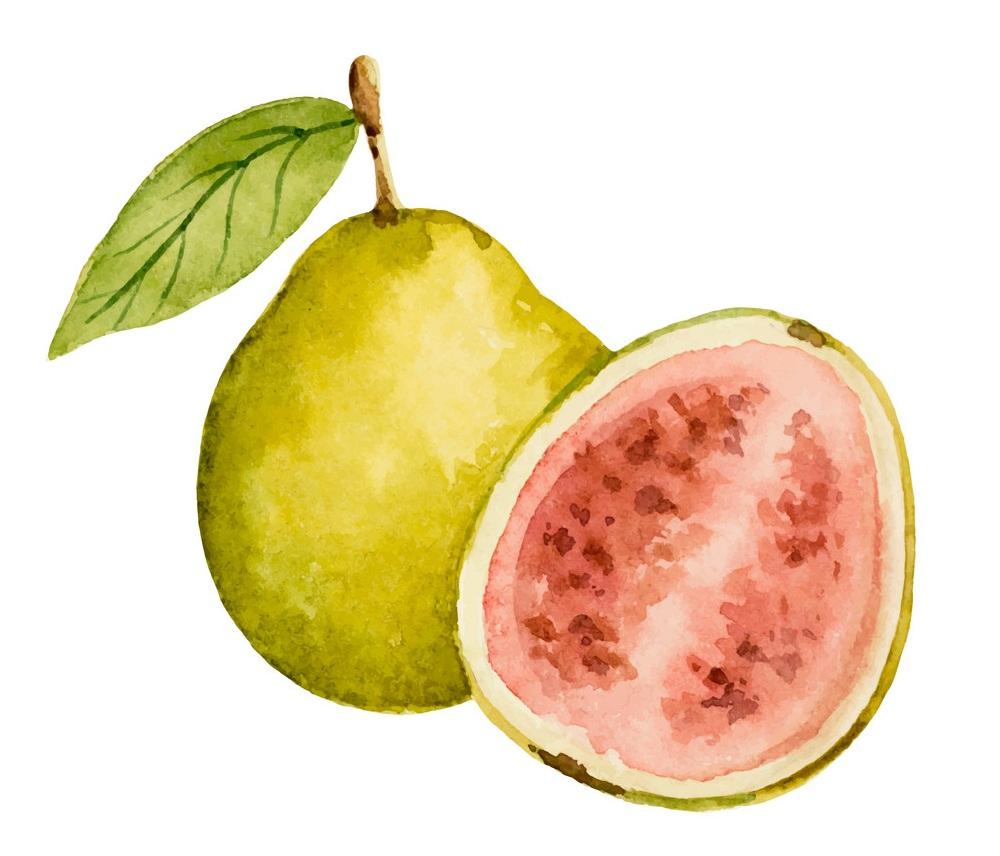 watercolor guava