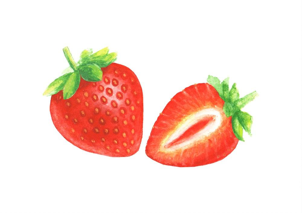 watercolor hand drawn strawberry