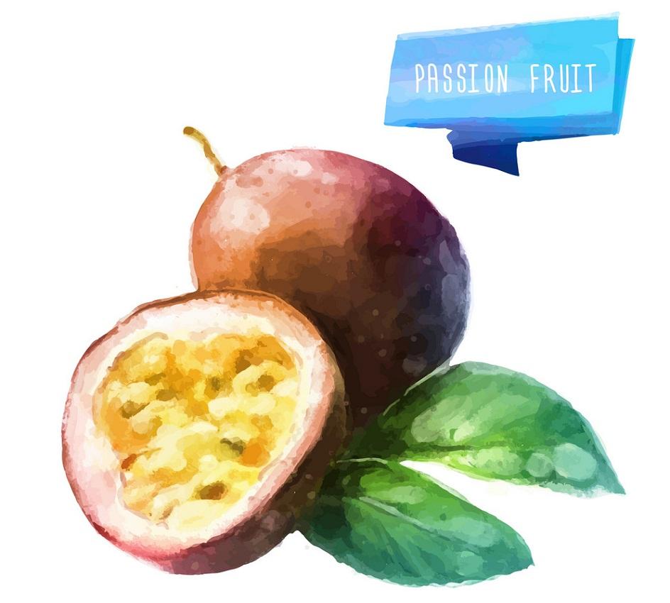 watercolor passion fruit