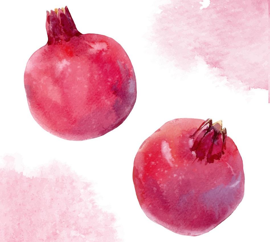 watercolor pommegranates