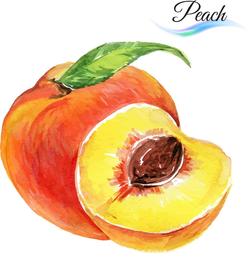 watercolor whole and half peach