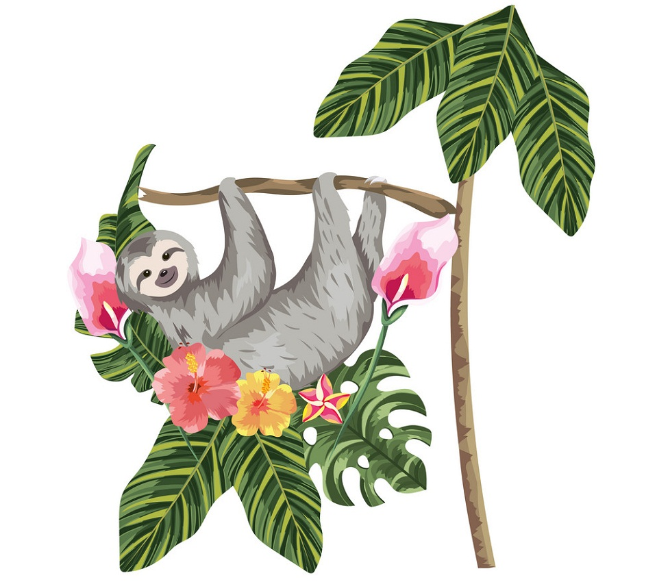 wild sloth hanging on a tree branch