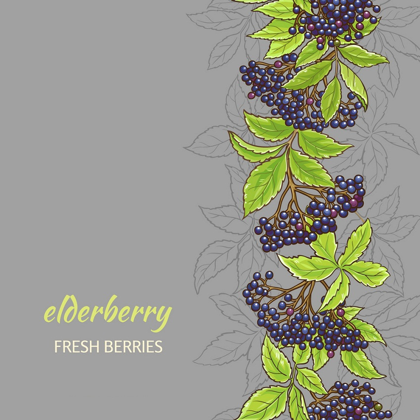 elderberry background