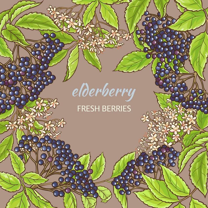 elderberry frame
