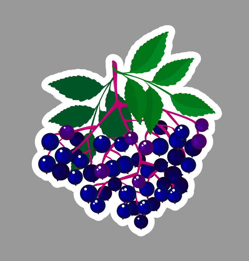 elderberry sticker