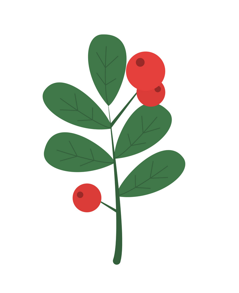 holly branch icon png