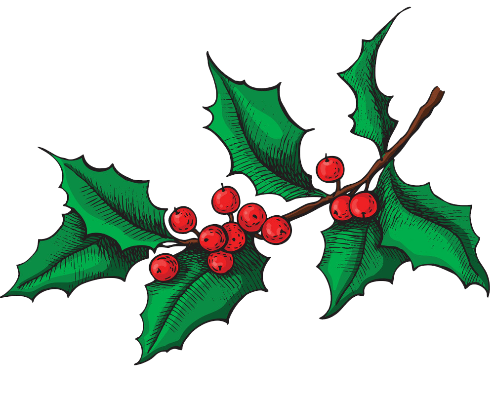 holly branch png transparent