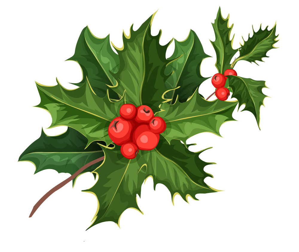 holly branch png