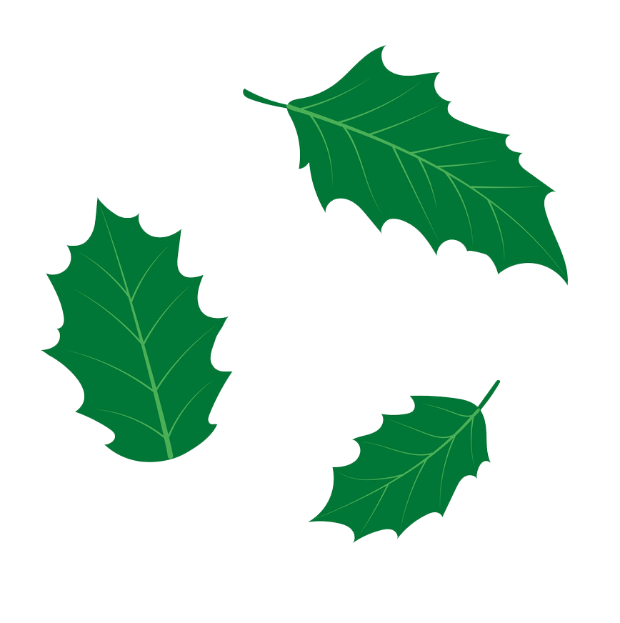 holly leaves png transparent