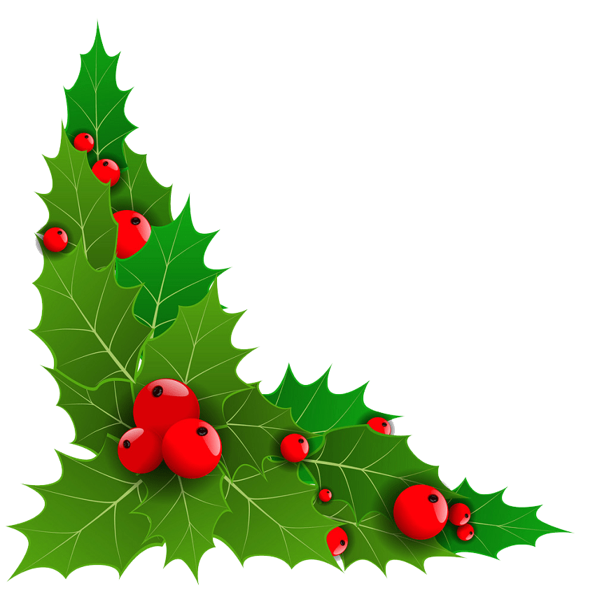 holly with big leaves png transparent