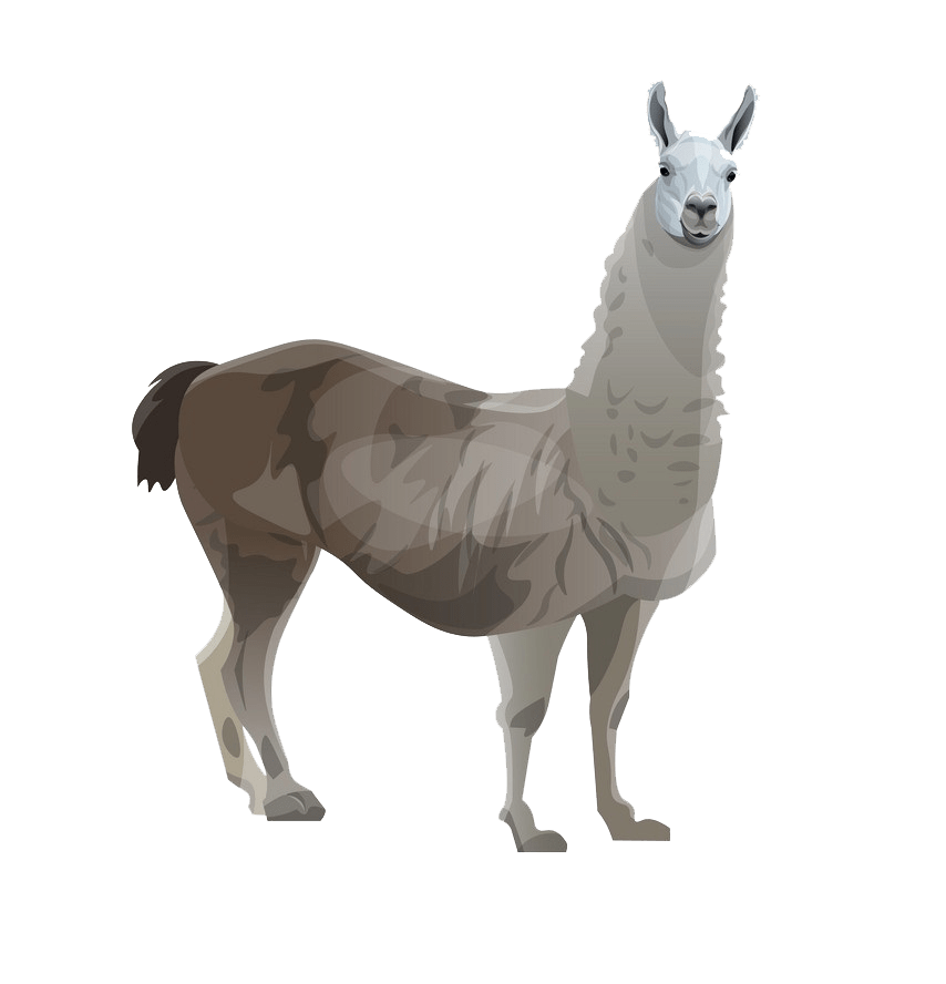 llama side view png transparent