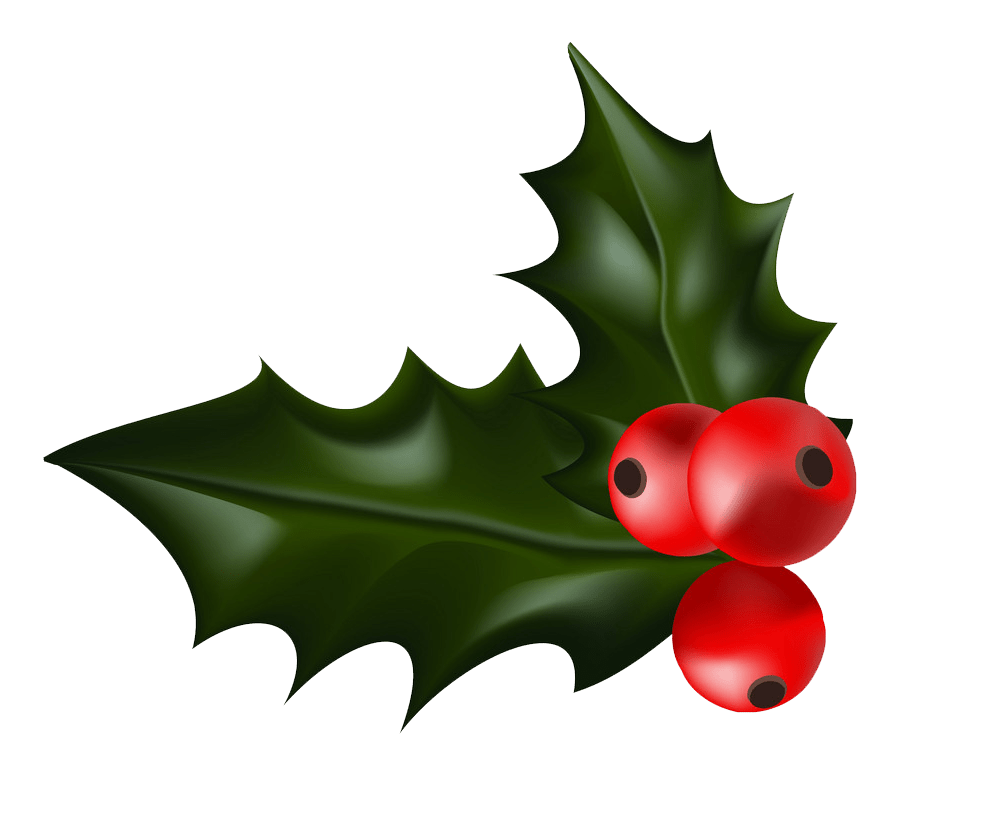 realistic holly png transparent