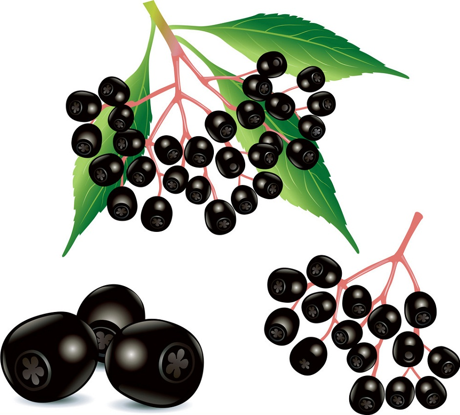 ripe black elderberries