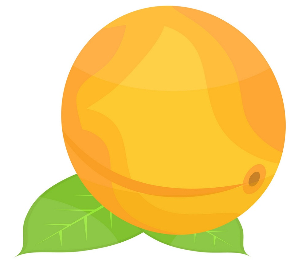 simple apricot with leaf