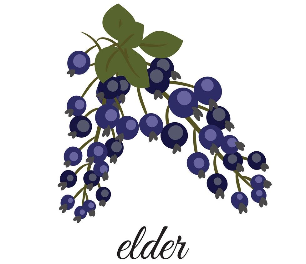 sprig of elderberry