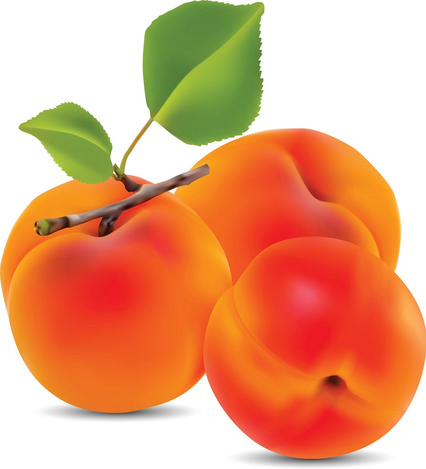 three realistic apricots